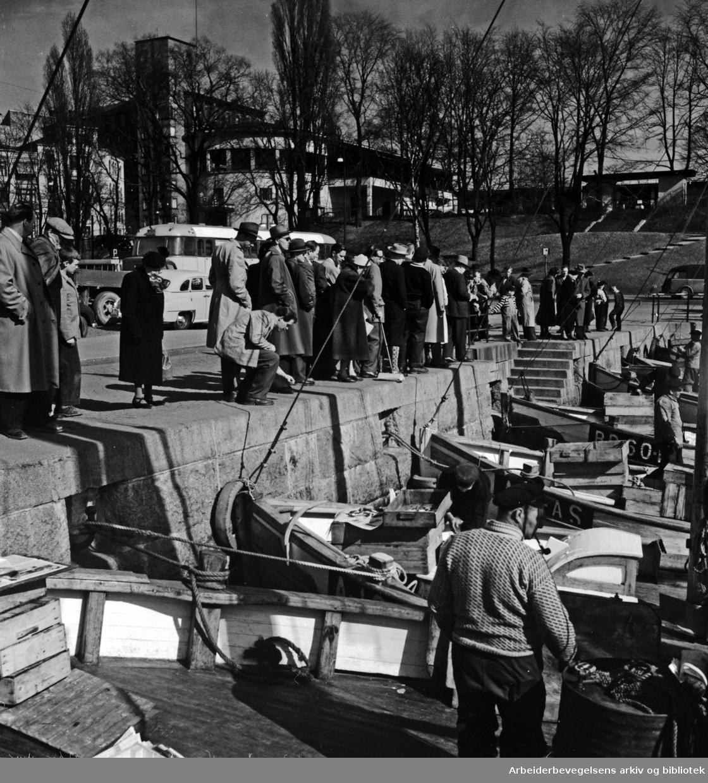 Havna. Stemningsbilder. Honnørbrygga. April 1955