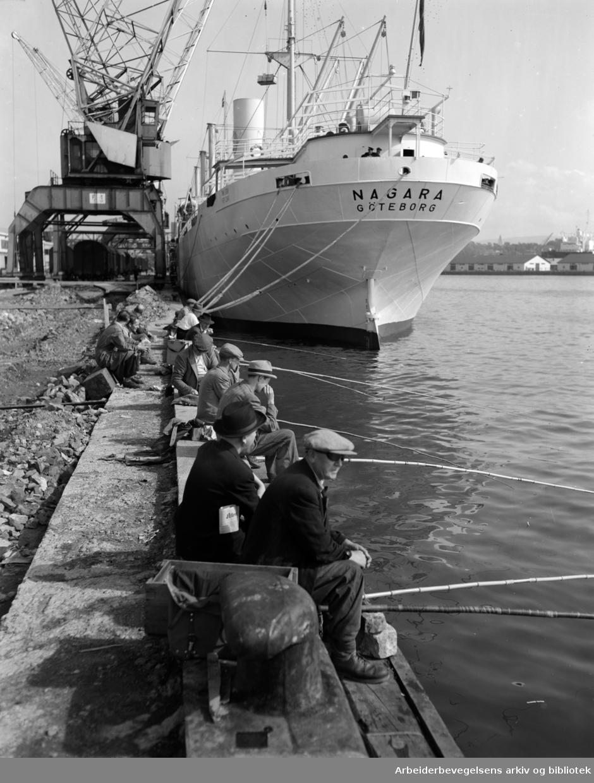 Havna. Bryggefiskere. August 1951