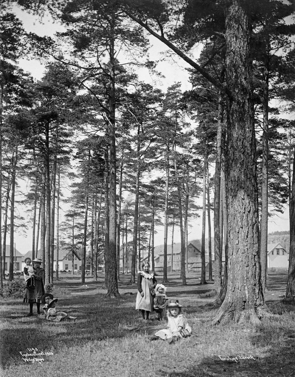 """Fra """"Furumoa"""" ved Larvik i Vestfold.  Fotografiet viser ei slette med gamle, store furutrær. I forgrunnen sju barn, de fleste jenter, som antakelig hadde dette stedet som lekeplass.  I bakgrunnen en del panelte våningshus langs vegen fra Øra og innover mot byens sentrum."""