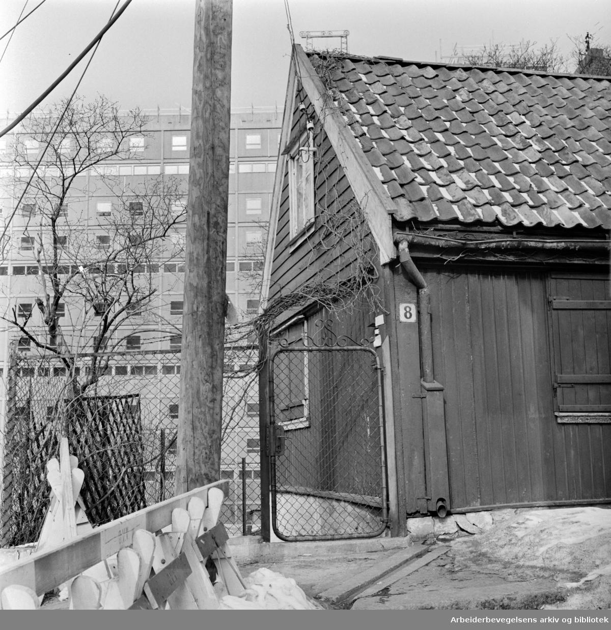 Enerhaugen: Langleiken. Langleiken 8. Mars 1963