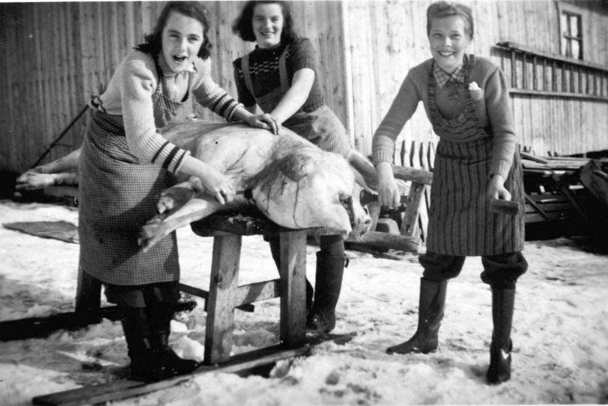 Slakting av gris i Røset søndre, Furnes, 1944. Fra v. Gunnår og Ingeborg Kvernvolden og Karin Johannessen.