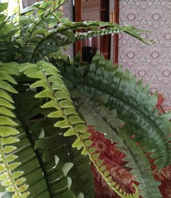 Stueplanter_web.jpg