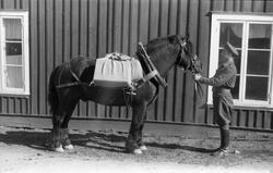 Et militært befal og en hest med kløv foran en husvegg. Sann