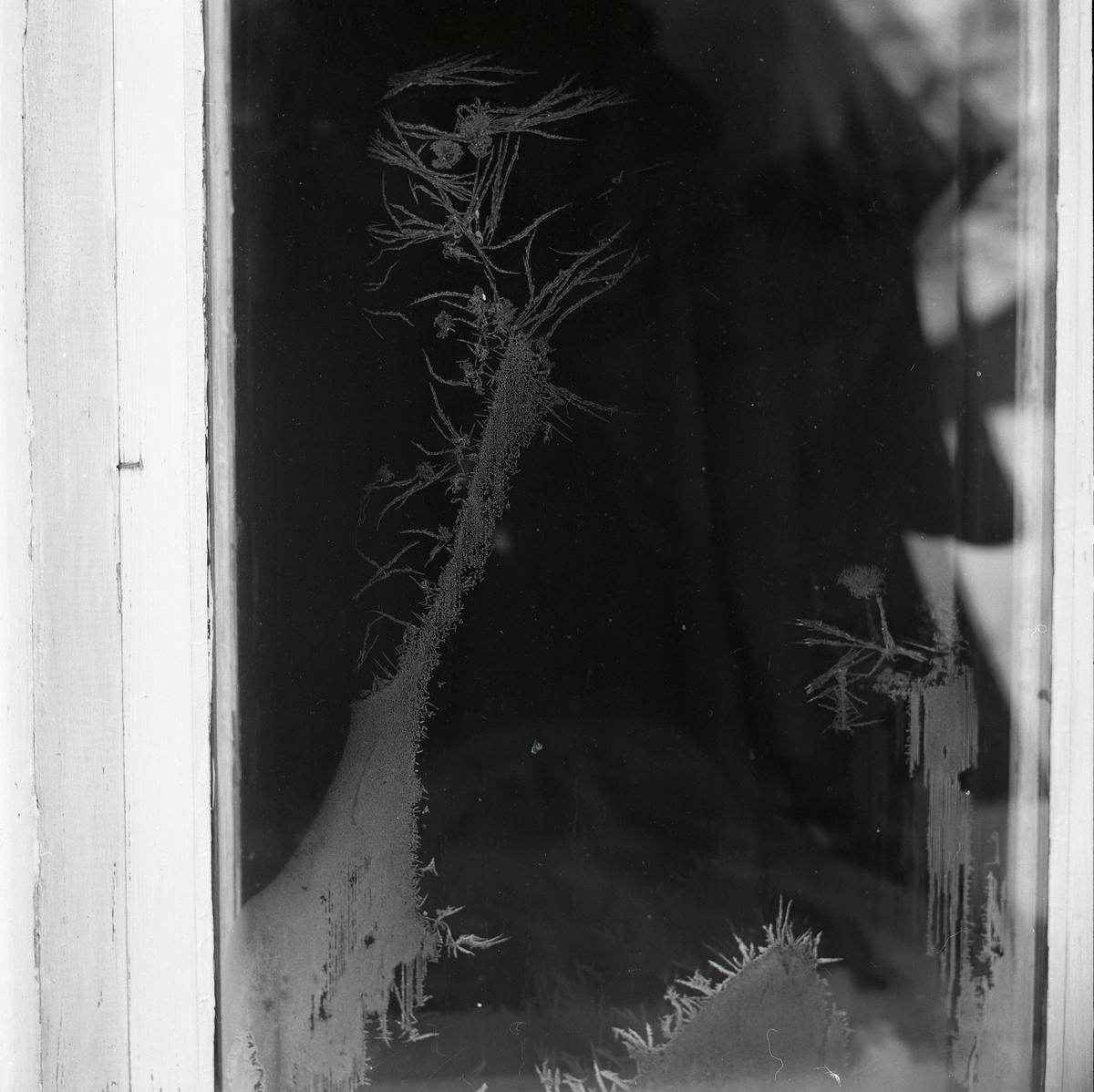 Fönster med rimfrost,1966.