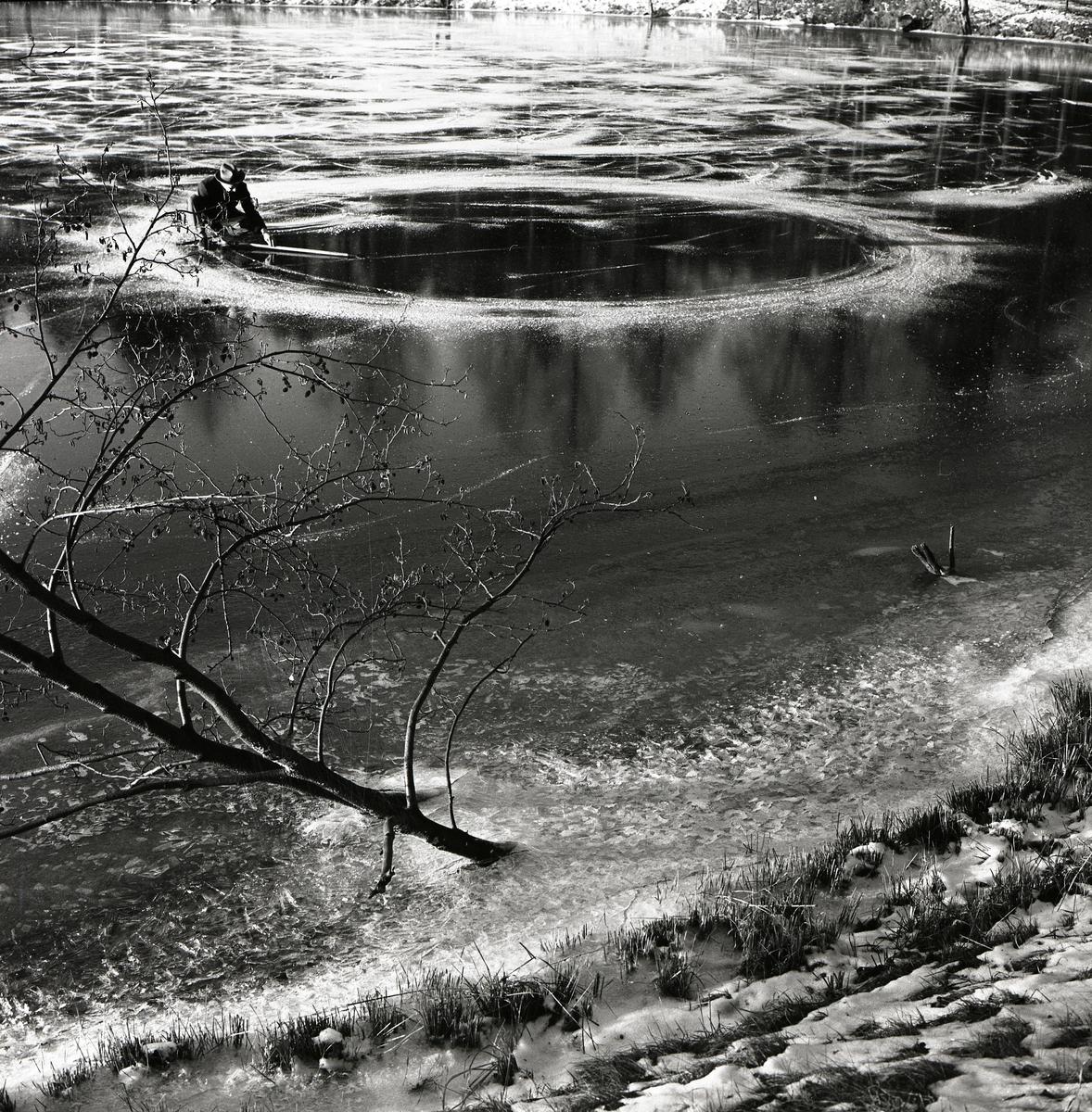En ring skapad av skridskospår på is den 5 december 1958.