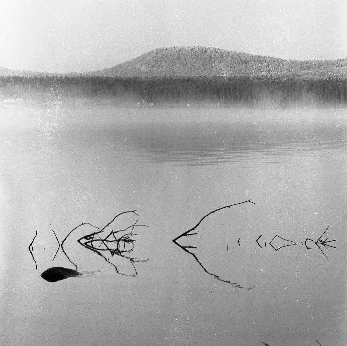 Några grenar sticker upp ur den spegelblanka Hölesjön vid Skäftesberget, december 1961.