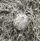 Ett djurbo byggt av gnagare under våren 1963.