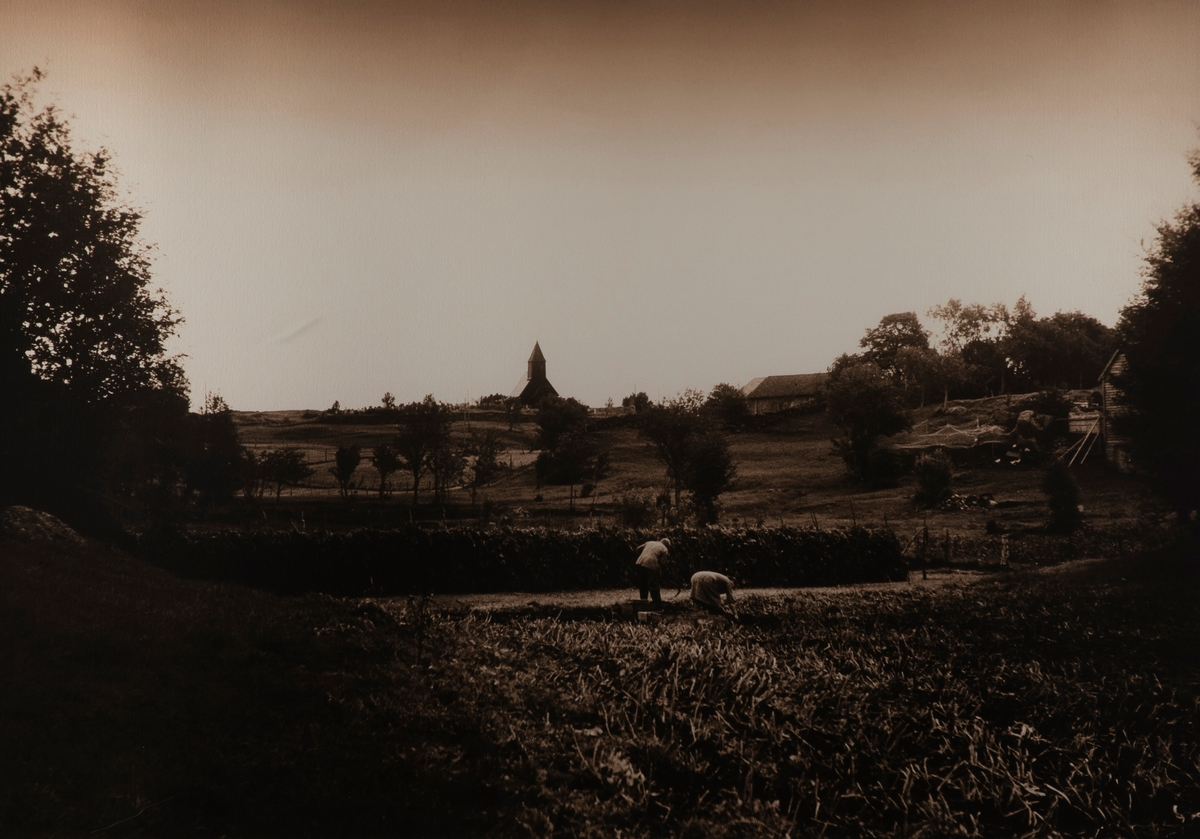 Vilnes kirke, Sognefjorden, Askvoll  (el. Jenny og Magnus tek opp poteter) [Foto]