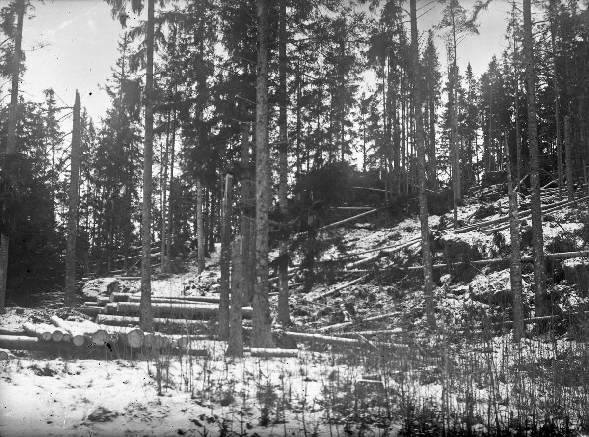 Eventuellt resultatet av en snöstorm 1923. Troligtvis i skogen runt Österbodarne.