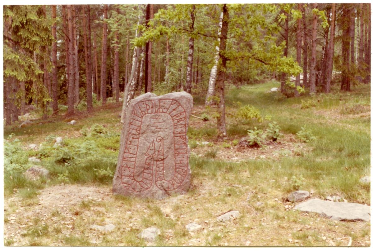 """Götlunda sn, Lungersåsen.  Från norra delen av gravfält nr 51: Runstenen """"Kung Sigges sten"""" i skeppsformig stensättning. På kala hällen t.h.: falsk runristning. Juni 1969."""