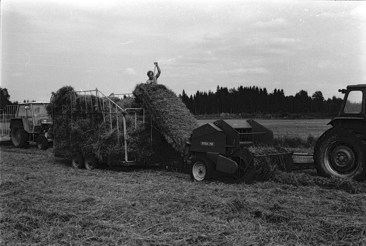 Höpressning med räfsa, press och balvagn, Mossbo, Tierps socken, Uppland juni 1981