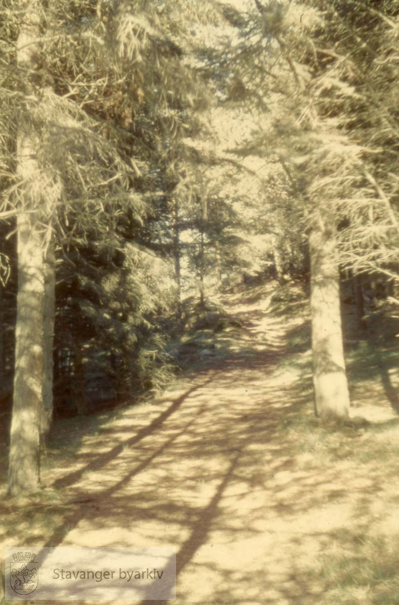 Stokkaskogen