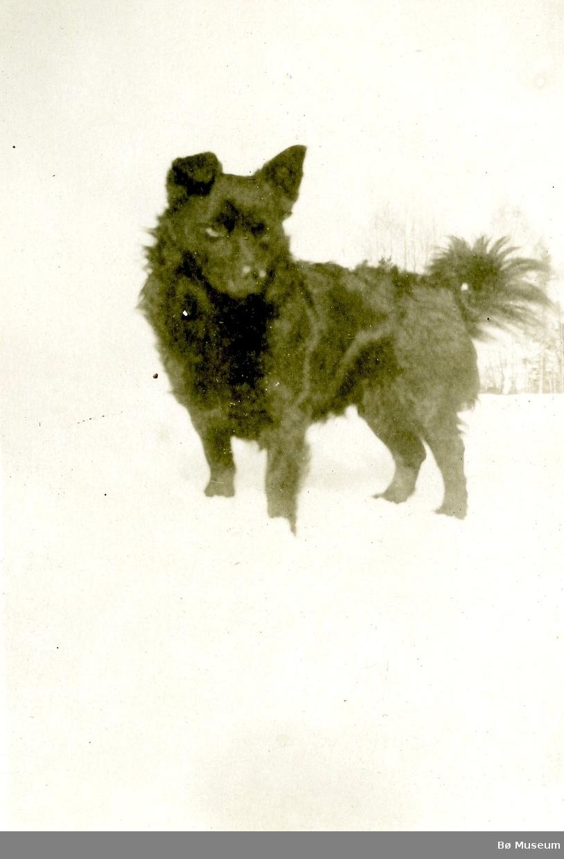 Eit bilete av hunden Tassus