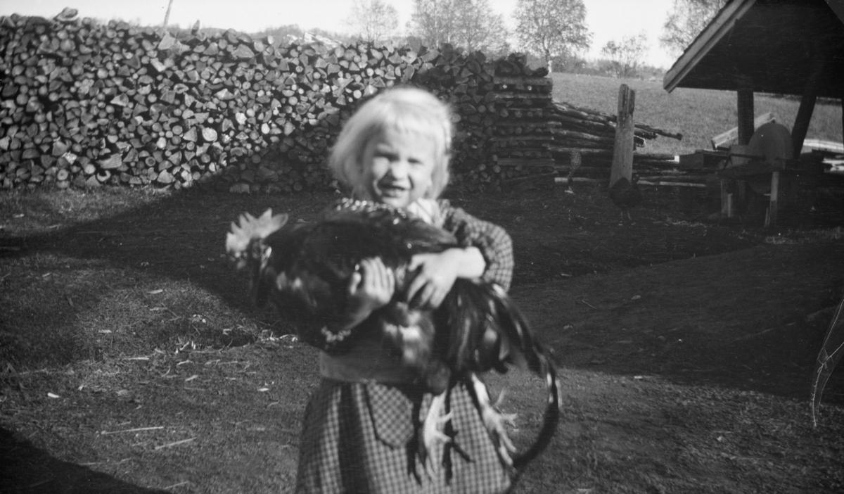 Liten jente med hane, antakelig på Linjordet i Østre Gausdal
