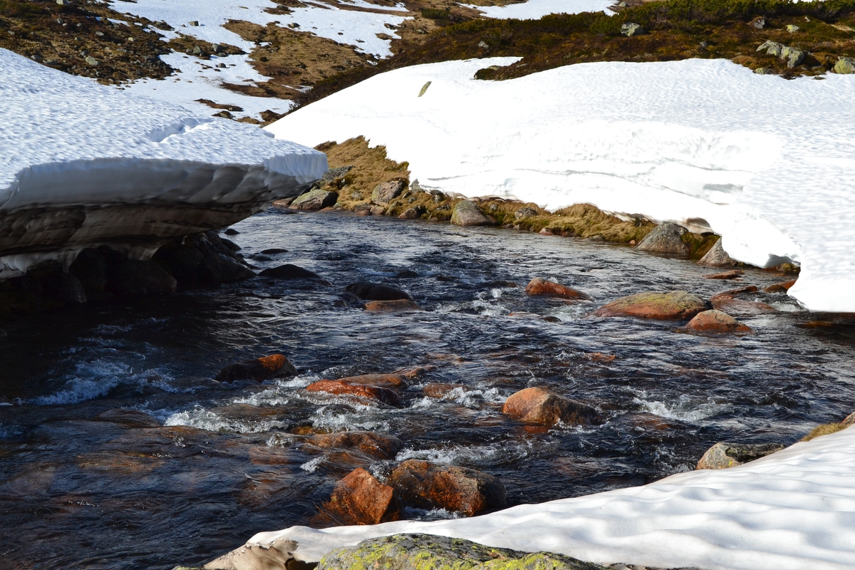 Asbjørn Haga, Karl Martin Mattingsdal, Martin Siqveland, Mette Østerhus og etter hvert Odd Einar Lundervold i Langeidsheia for å sette opp gjerder før sauene jages ut på beite. Noen steder fikk de ikke satt opp skikkelig gjerde på grunn av snø. Mye regn førte til høy vannføring i elver og bekker.