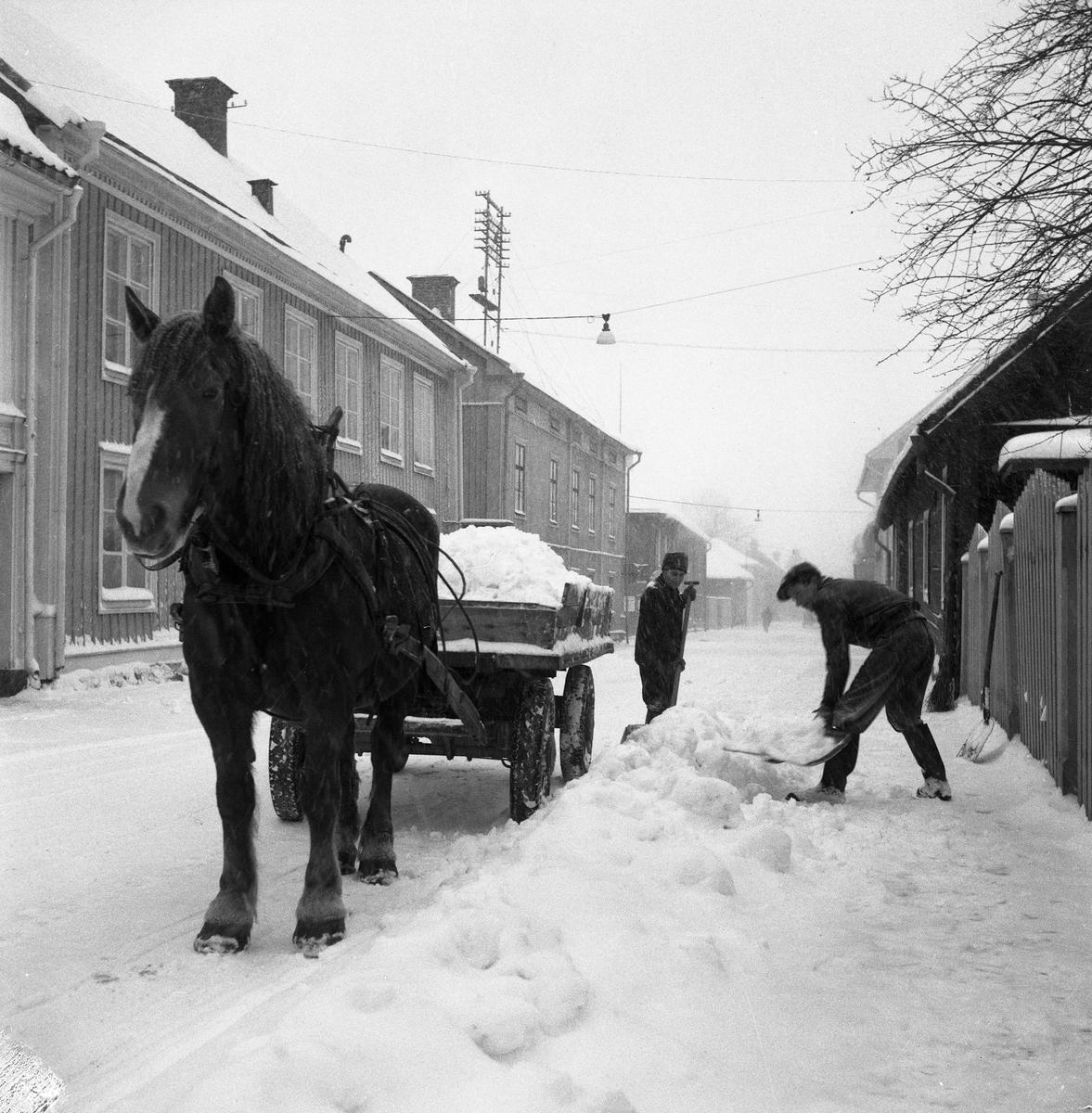 Snöröjning. Tvä män skottar upp snö på en vagn medan hästen tålmodigt väntar i snöfallet.