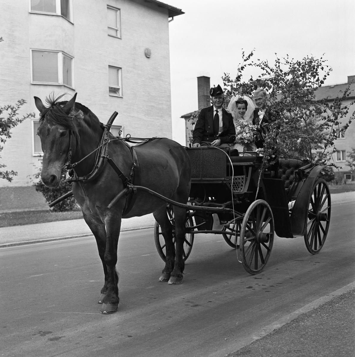 Kusken Gustav Jansson kör brudparet Levin i björkklädd vagn. Bruden bär krona och slöja. I buketten ses rosor och prästkragar. Gustav har uniform och hästen har en blomma vid örat.