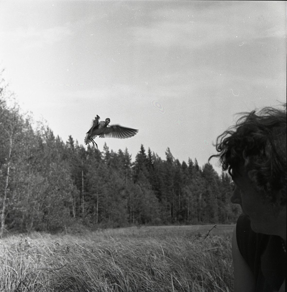En flygande grönbena i Rogsta, juni 1959.