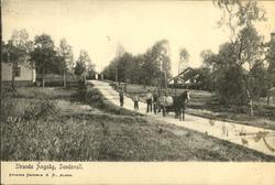 Vykort med motiv över vägparti av Strand på Alnö.