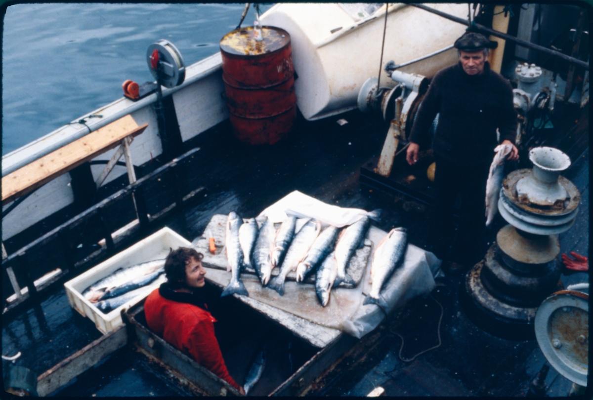 Fiskere med laks på romluka i en båt.