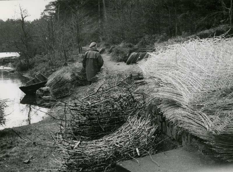 Netting til østersoppdrett