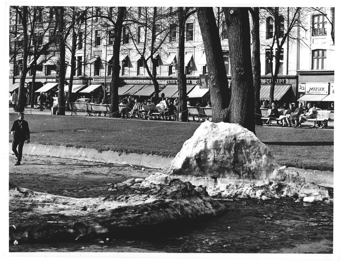 """Restene av arkitektstudentenes """"borg"""" og solsikkerne overfor å Karl Johan"""