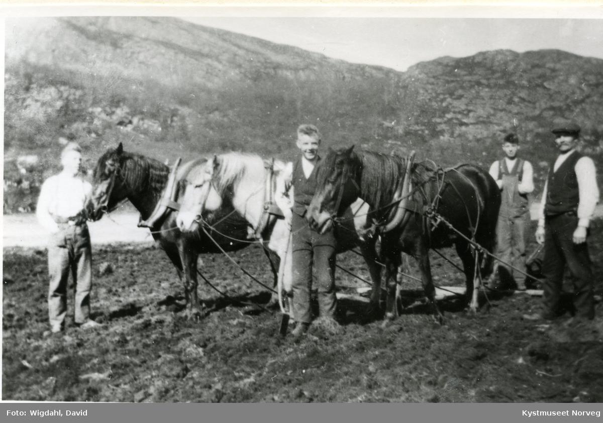 Arnt, Einar, Toralf og Alf Storsul
