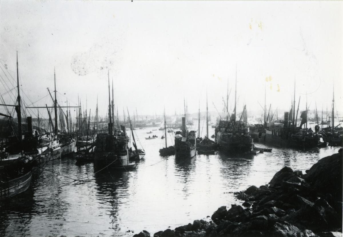 Fiskebåt, havn, sildefiske,
