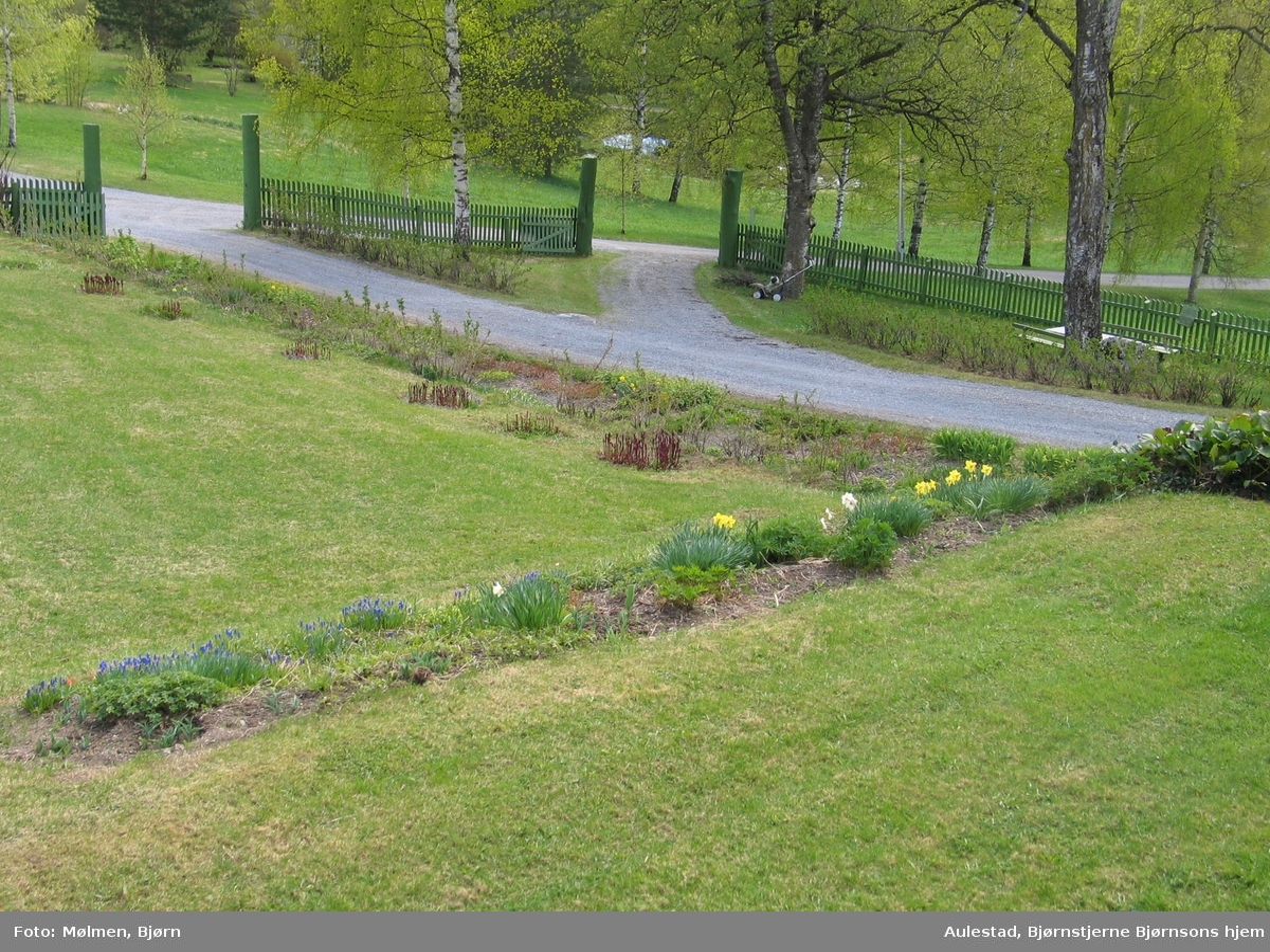 DOK:2007, Aulestad, hage, blomster, vår,
