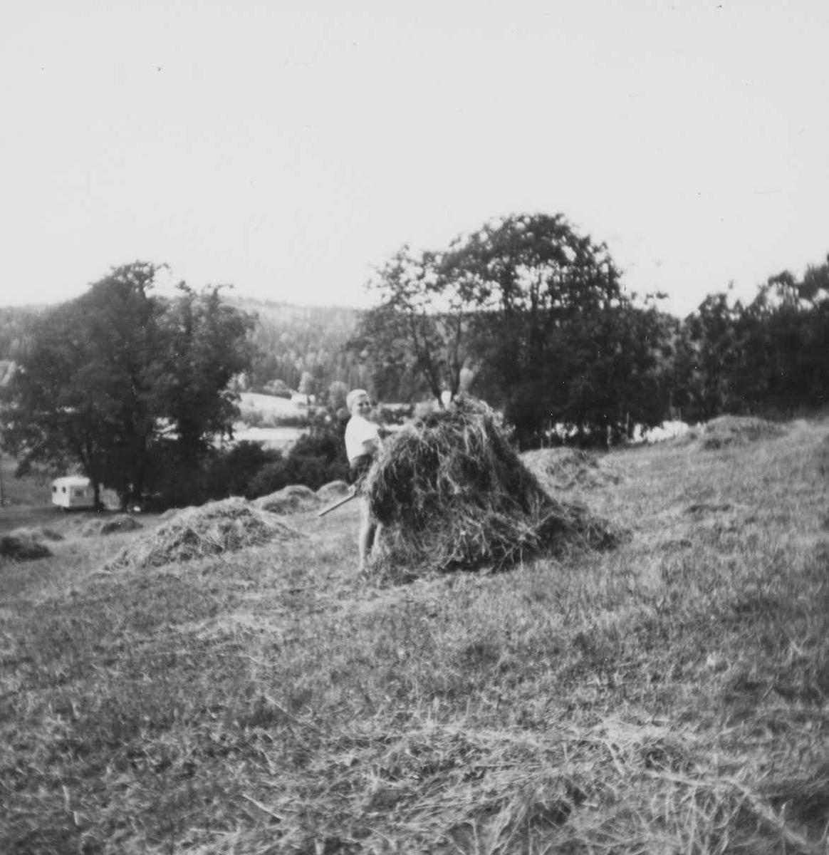 Høysåting i 1965