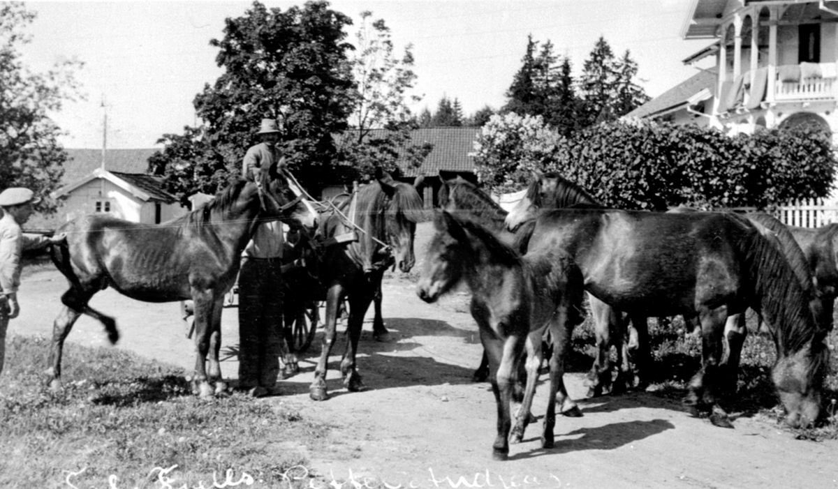 Petter og Andreas på tunet på Heramb, Ringsaker med hester som skal til fjells.