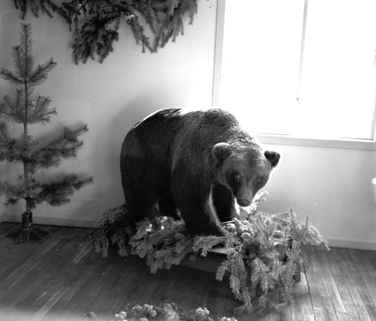 Utstoppet bjørn