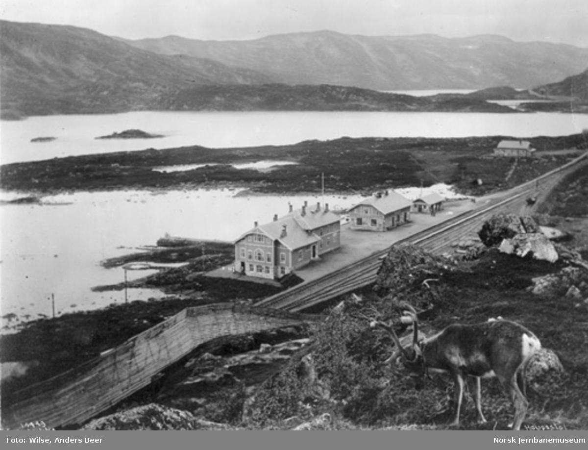 Oversiktsbilde med Haugastøl stasjon og hotellet; reinsdyr i forgrunnen