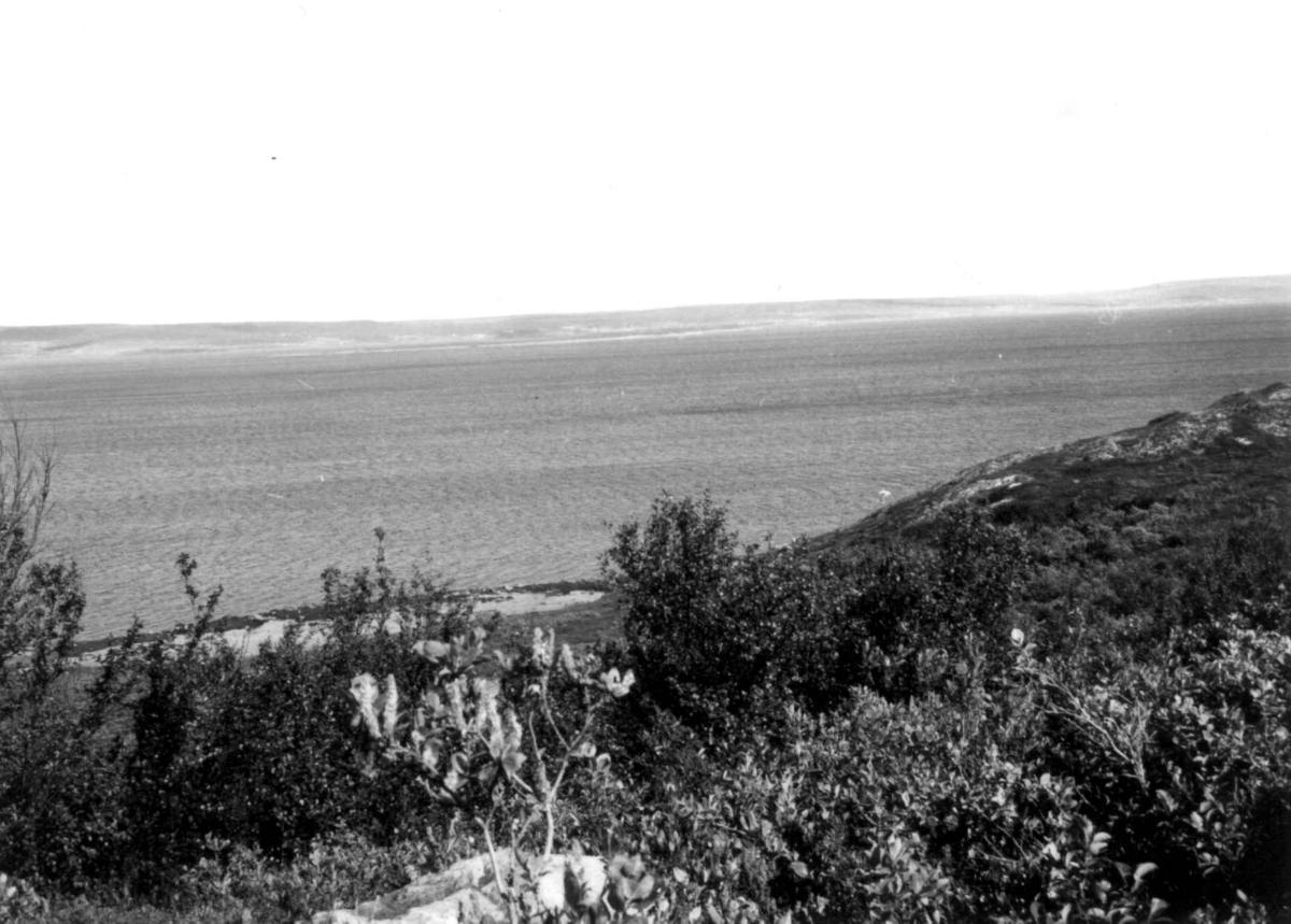 Oversiktsbilde over Varangerfjord sett fra sørsiden, i bakgrunnen Nesseby, 1968.