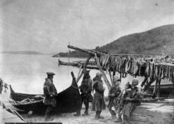 Sjølapper i Lyngseidet fotografert ved en robåt og tørrfisk.
