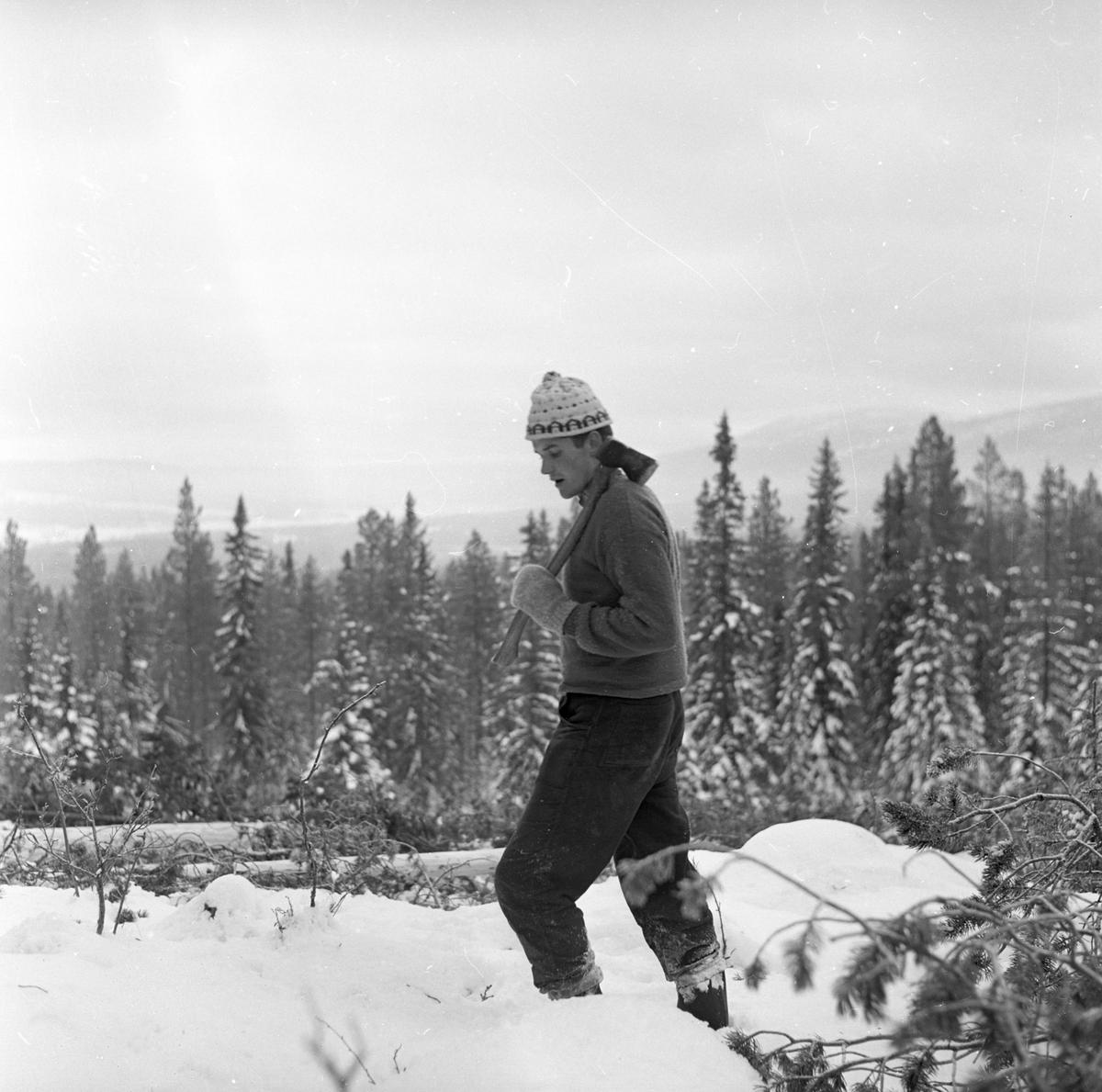 Hedmark, Tynset, Savalen, 13.04.1964, langrennsløperne trener.