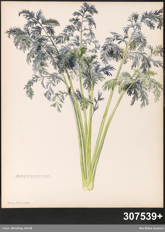 Vegetativt
