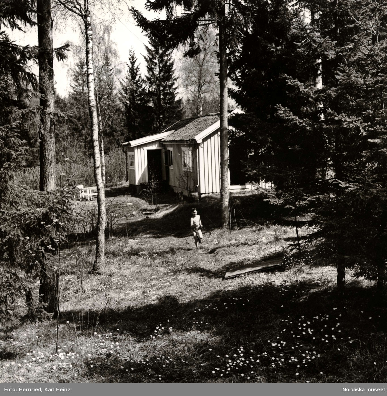 Skogsglänta med sommarstuga  i Margretelund, Åkersberga i Uppland. Pojke springer i gräs intill stuga