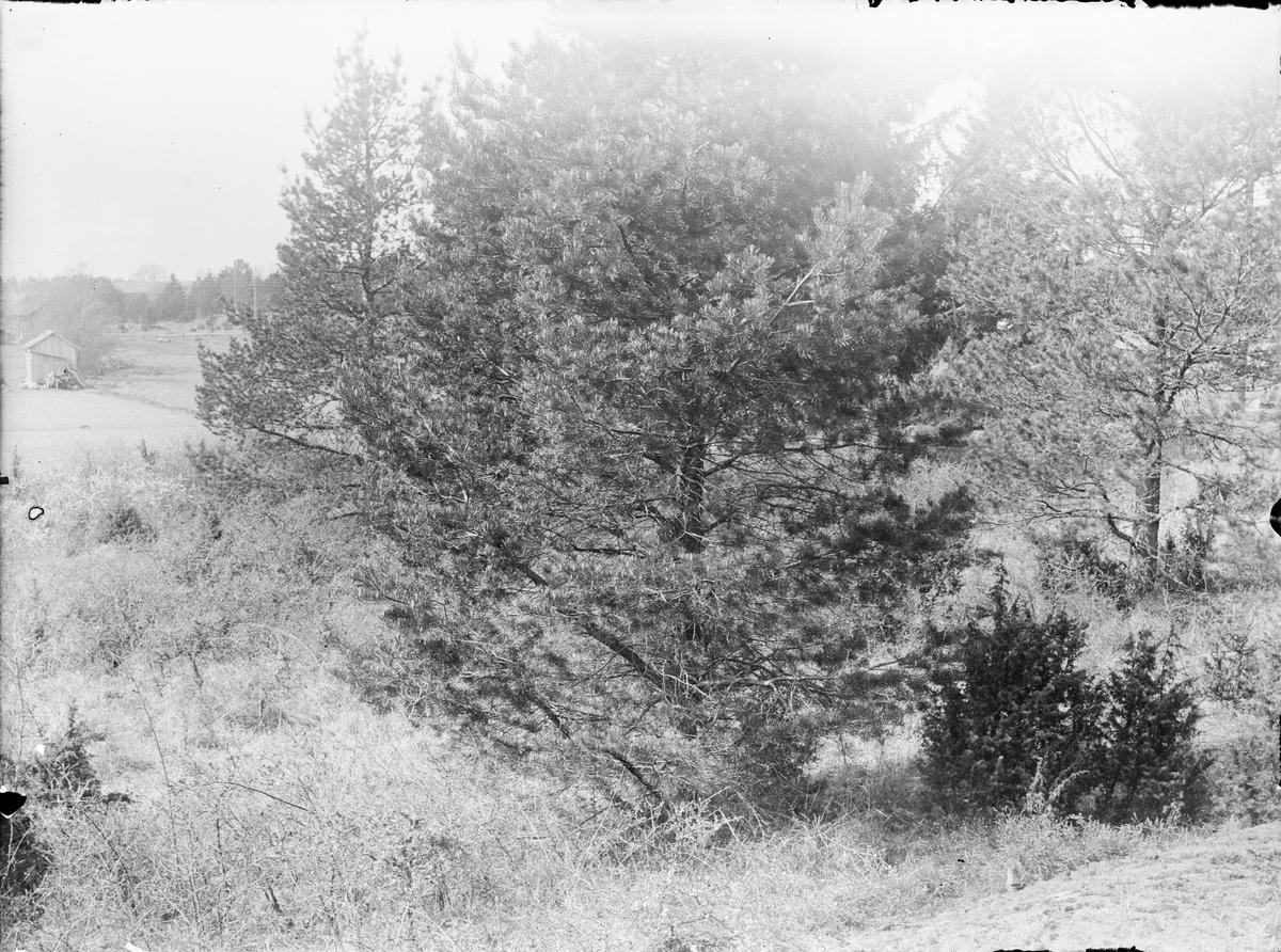Skogsbacke, sannolikt Funbo socken, Uppland
