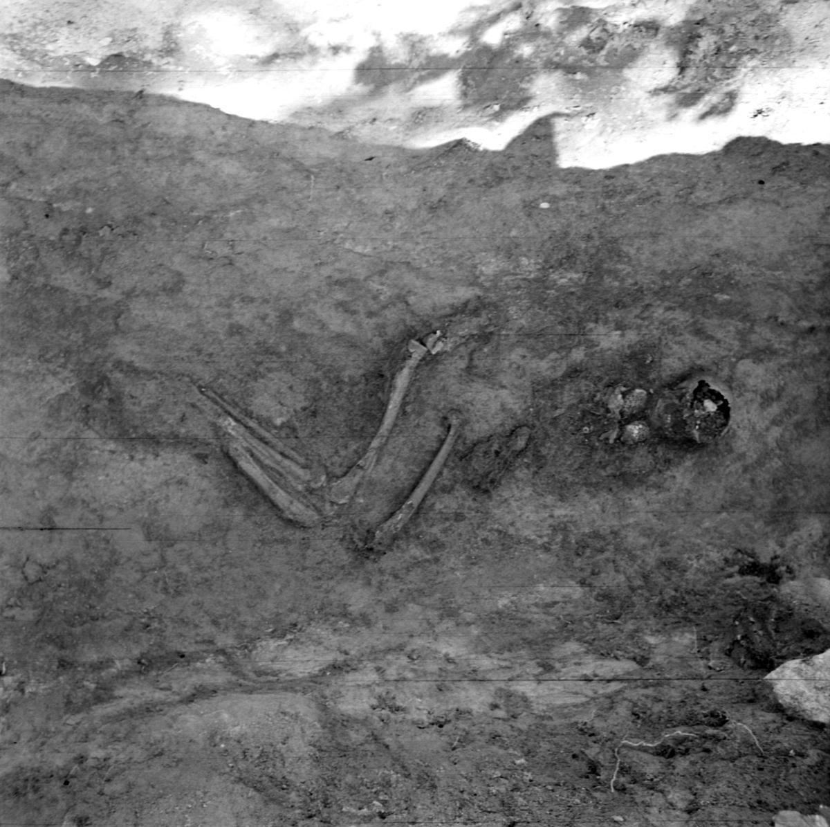 Prästgården, skelett med spänne grav 36 - Arkeologi Gamla Uppsala 1973