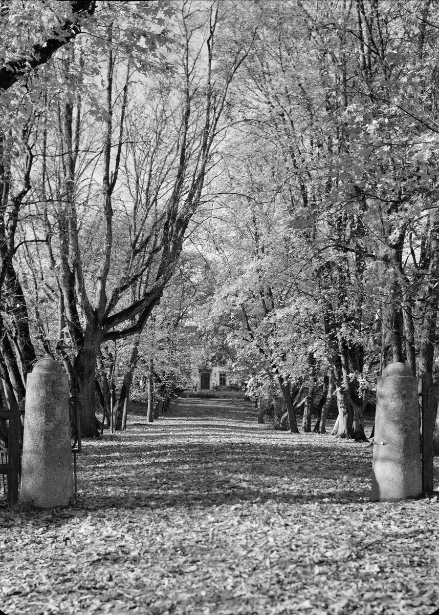 Allé i parken vid Nyborgs gård, Håtuna socken, Uppland 1939