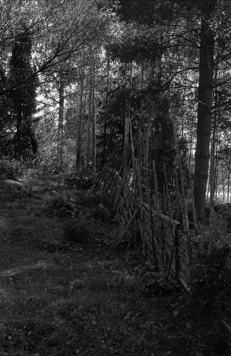 Beteslandskap, Stora Tadinge, Almunge socken, Uppland 1987