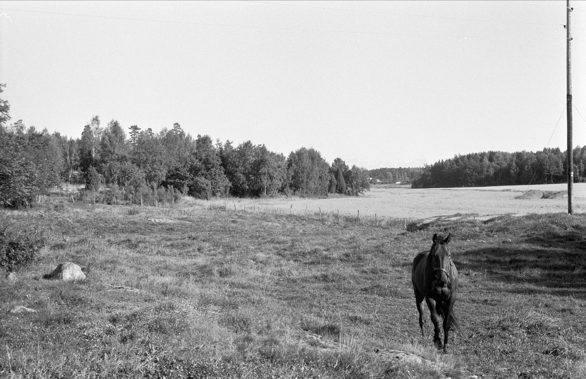 Hagmark, Hagby gård, Almunge socken, Uppland 1987