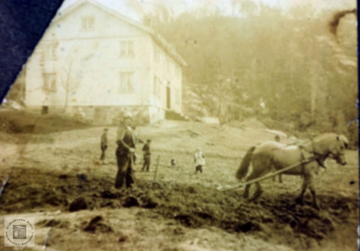 Harving med hest på Kollungtveit. Grindeheim Audnedal.