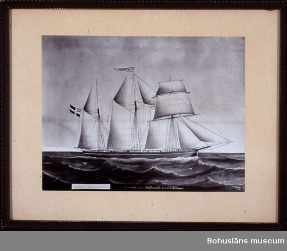 Ur handskrivna katalogen 1957-1958:  Sv/v foto i ram av marinmålning (skeppsporträtt)  föreställande Skonerten  Petronella. Fotots H: 16,5 Br. 22.  Lappkatalog:  Se även annat material rörande skonerten Petronella från Uddevalla och befälhavaren O. J. Larsson under UM5798 och UMFA53086:143 /A-LSM