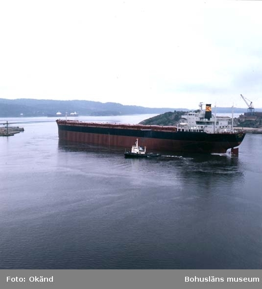 M/S Norse Lion D.W.T. 116.092 Rederi Cardigan Shipping Co. Ltd., Cardiff England Kölsträckning 71-10-27 Nr. 244 Leverans 72-06-16 Bulkfartyg
