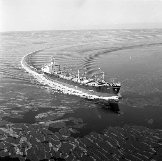 Fartyg nr. 258 B/C Hafnia, bulklastfartyg.