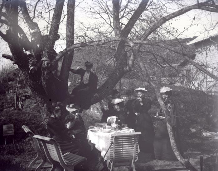 Dambjudning i trädgården, Backudden, 1 maj 1895.