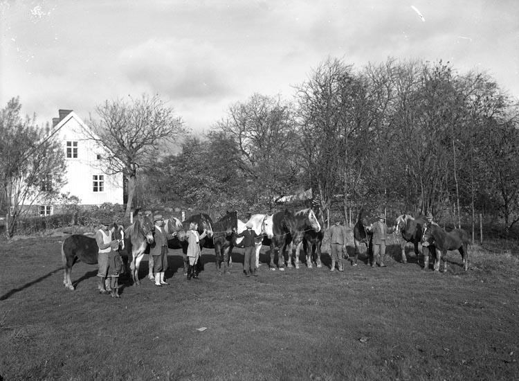 """Enligt medföljande noteringar: """"43. 1943. Hästgrupp. Arendator Karl Lundgren Foss.""""  Uppgifter från Munkedals HBF: """"Mellan häst nr 2 och 3 från vänster, klädd i hatt, står Karl Lundberg. Prästgård."""""""