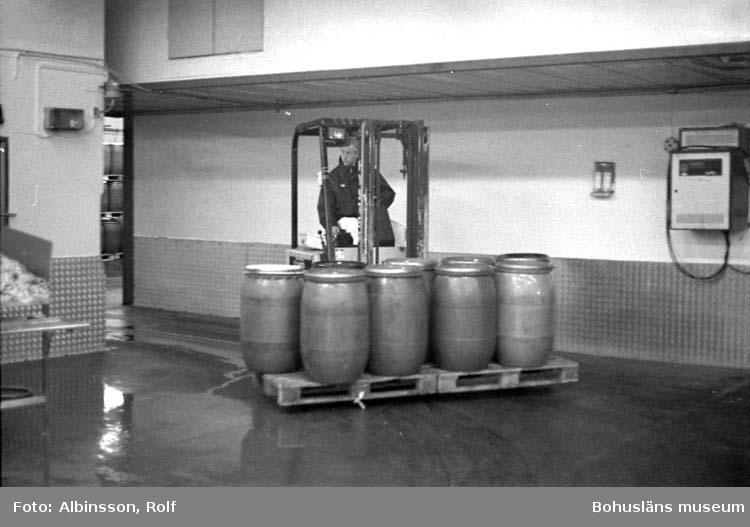 """Enligt fotografens noteringar: """"Här kommer fler tunnor med sill ifrån bergrummet.  Den har kommit ifrån Mollösund och filéats där.""""  Fototid: 1996-03-14."""
